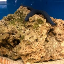 Blue Moon Aquarium Services | 23933 Nichols Sawmill Rd, Hockley, TX 77447, USA