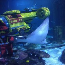SEA LIFE Aquarium | LEGOLAND California Resort, 1 Legoland Dr, Carlsbad, CA 92008, USA