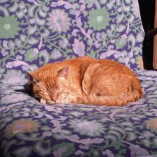 At Home, At Rest Pet Euthanasia   1750 Meridian Ave #5371, San Jose, CA 95125, USA