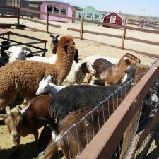 Windswept Ranch Petting Zoo | 11101 Robert Ranch Rd, Willow Springs, CA 93560, USA