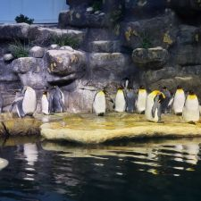 Aquarium At Moody Gardens | 1 Hope Blvd, Galveston, TX 77554, USA