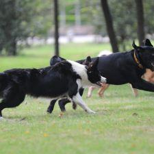 Waggin' Tails Pet Ranch   7631 Katy Fulshear Rd, Fulshear, TX 77441, USA