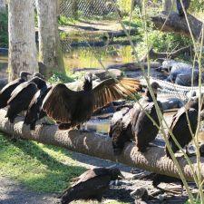 Jungle Adventures, A Real Florida Animal Park | 26205 E Colonial Dr, Christmas, FL 32709, USA
