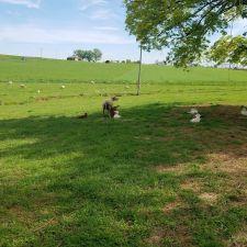 Meadow Run Farm 727 Rettew Mill Rd Lititz Pa 17543 Usa