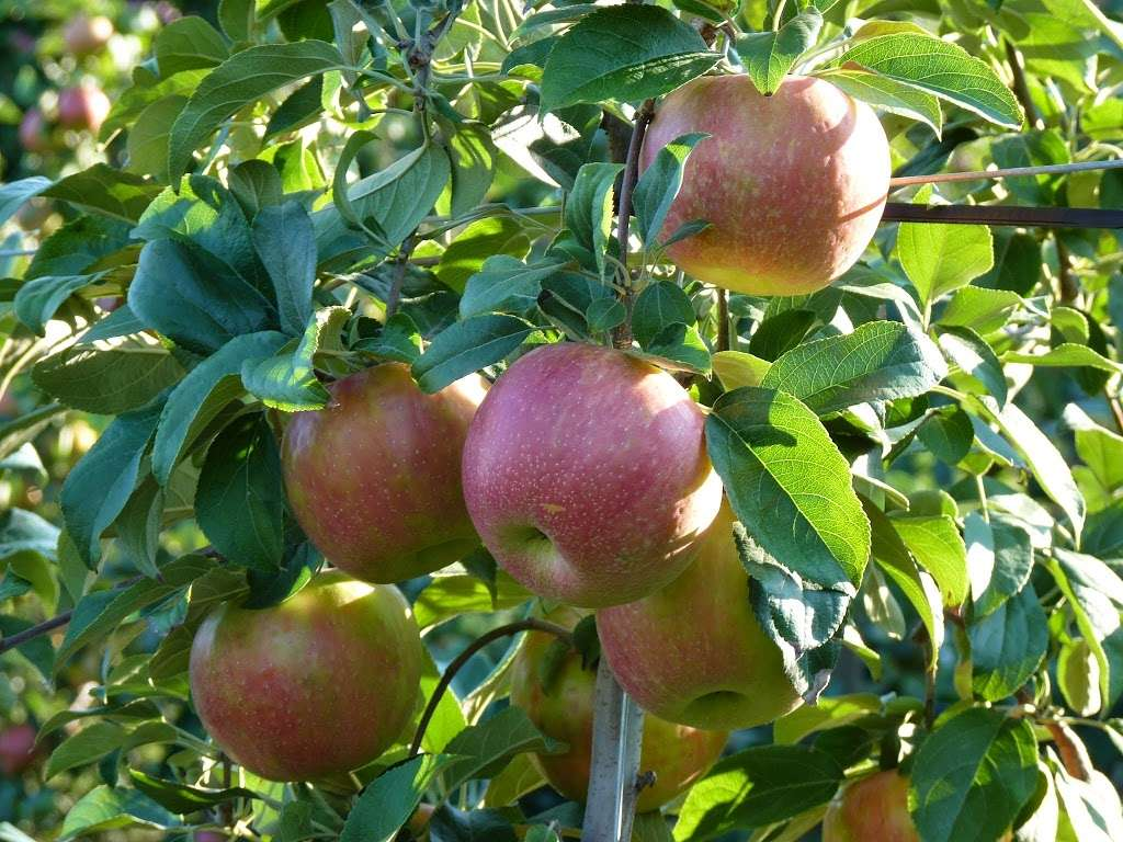 Barden Family Orchard - store  | Photo 1 of 10 | Address: 56 Elmdale Rd, North Scituate, RI 02857, USA | Phone: (401) 934-1413