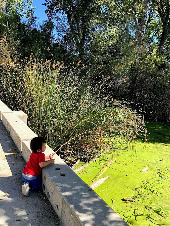 Boris Lake Bench - park  | Photo 5 of 7 | Address: Pleasanton, CA 94566, USA