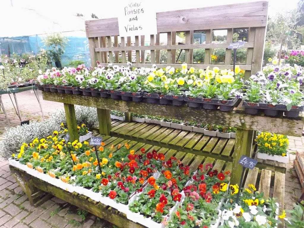 Abridge Garden Centre - florist  | Photo 2 of 10 | Address: Ongar Rd, Abridge, Romford RM4 1AA, UK | Phone: 01708 688558