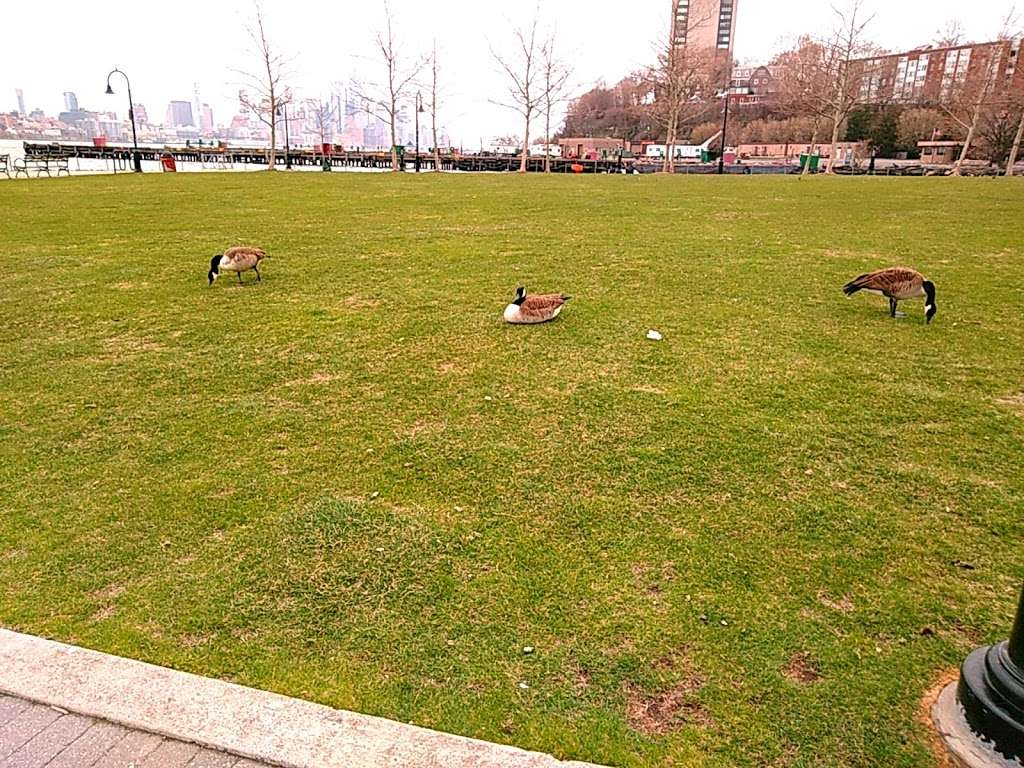 Maxwell Place Park - park  | Photo 1 of 10 | Address: 11TH Sinatra Dr N, Hoboken, NJ 07030, USA | Phone: (201) 420-2012