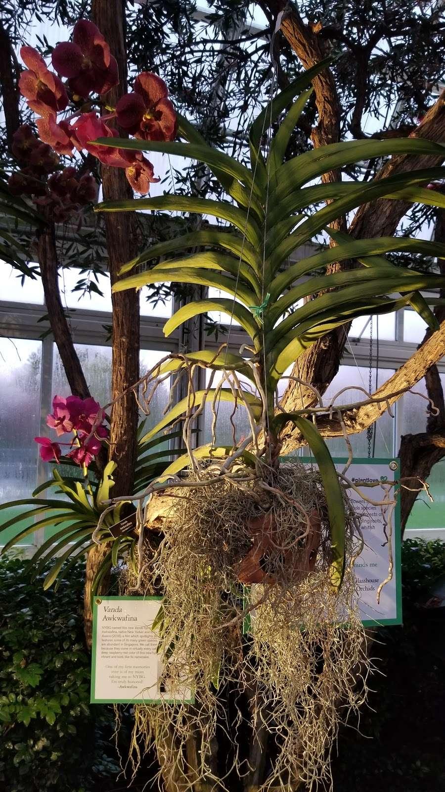 Bronx Botanical Garden - museum  | Photo 5 of 10 | Address: The Bronx, NY 10458, USA | Phone: (718) 817-8700