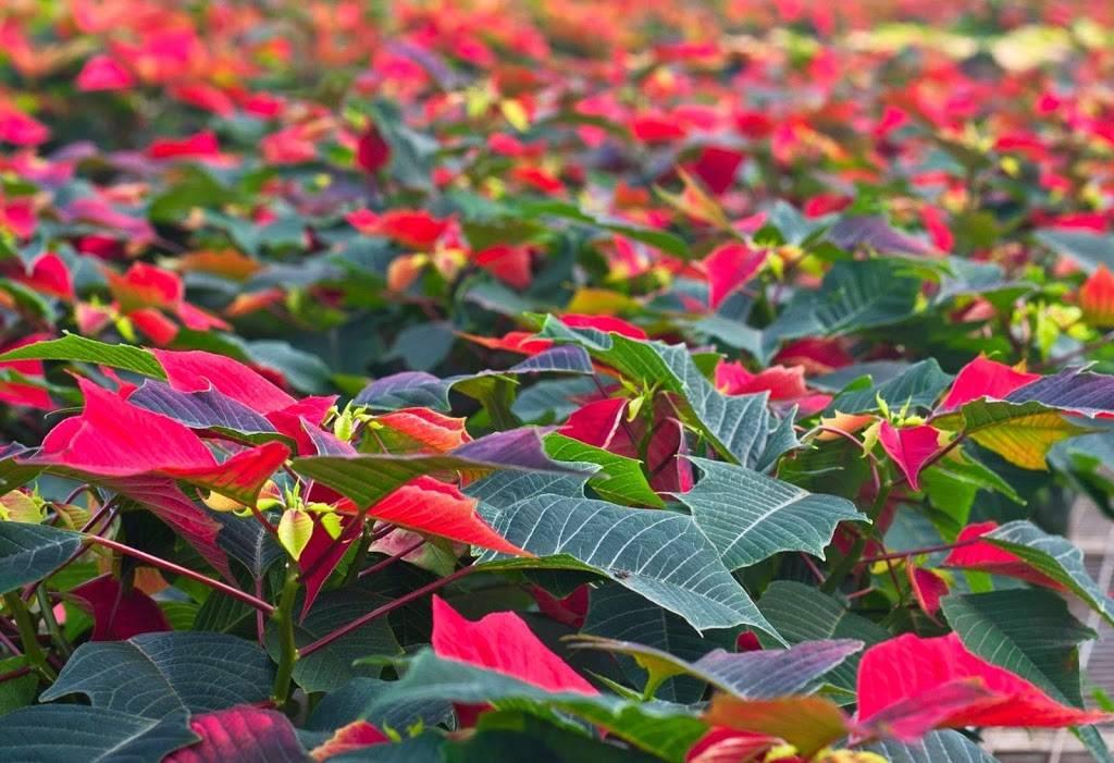 Edwards Greenhouse - florist  | Photo 2 of 10 | Address: 4106 Sand Creek St, Boise, ID 83703, USA | Phone: (208) 342-7548