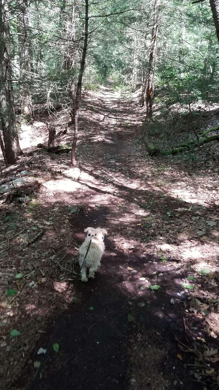 Rocky Knob Trail Head - park  | Photo 2 of 10 | Address: Ridge Rd, Shippensburg, PA 17257, USA | Phone: (717) 352-2211