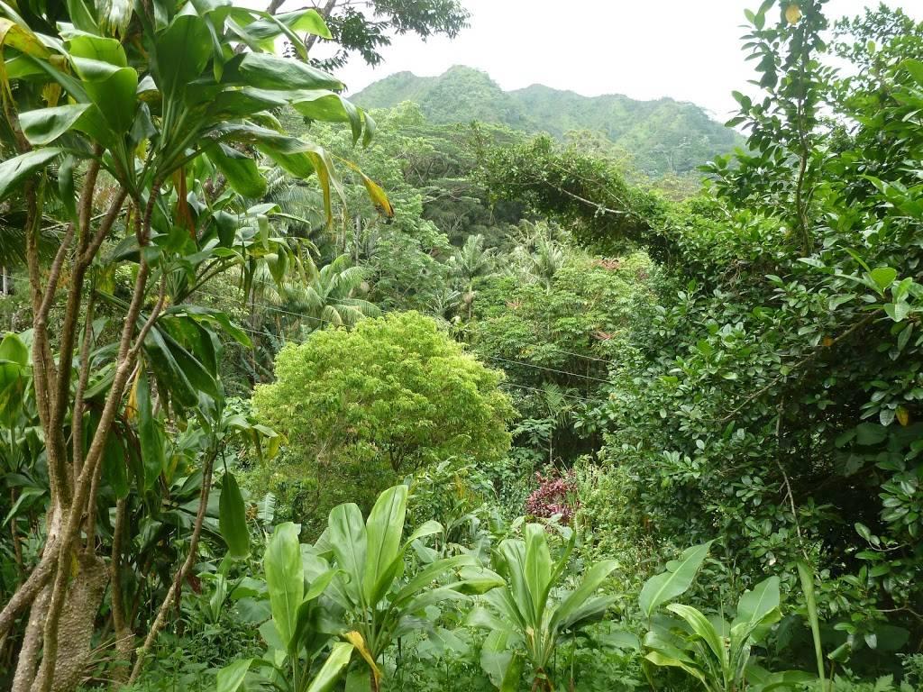 Lyon Arboretum - park    Photo 3 of 9   Address: 3860 Manoa Rd, Honolulu, HI 96822, USA   Phone: (808) 988-0456