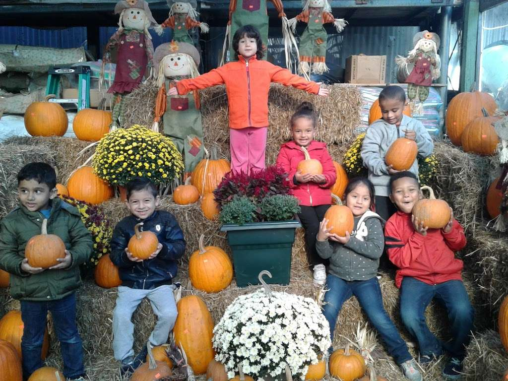 Vernis Garden Center - florist  | Photo 3 of 8 | Address: 22-22 Hazen St, East Elmhurst, NY 11370, USA | Phone: (718) 278-7348