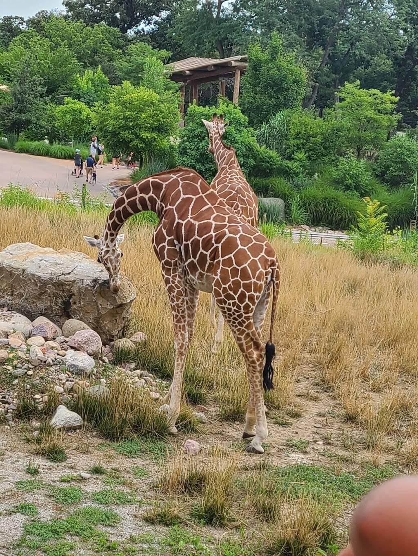 Omaha Zoo South (Main) Entrance - zoo    Photo 3 of 10   Address: 3701 S 10th St, Omaha, NE 68107, USA   Phone: (402) 733-8401