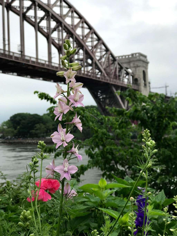 Native Plant Garden - park  | Photo 7 of 8 | Address: 11 Wards Meadow Loop, New York, NY 10035, USA