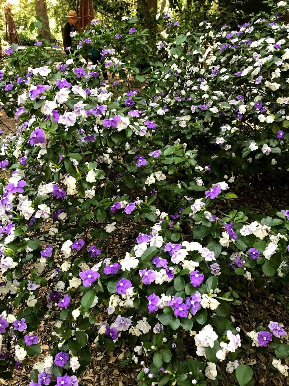 Hilltop Garden - park  | Photo 2 of 5 | Address: La Cañada Flintridge, CA 91011, USA