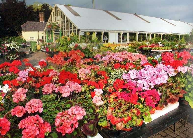 Abridge Garden Centre - florist  | Photo 4 of 10 | Address: Ongar Rd, Abridge, Romford RM4 1AA, UK | Phone: 01708 688558