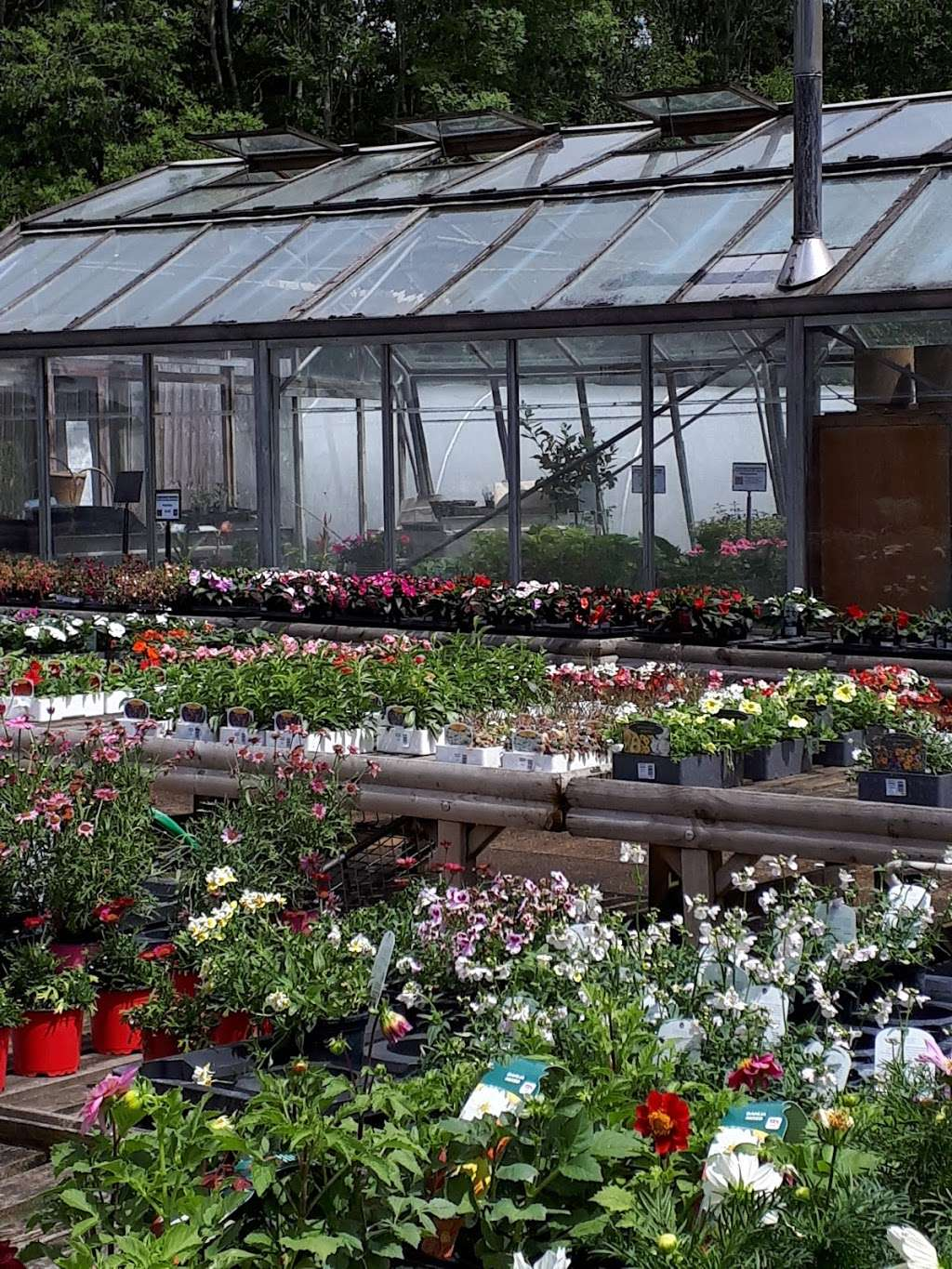 Buckland Nurseries Garden Centre - store  | Photo 7 of 10 | Address: Reigate Rd, Reigate, Betchworth RH2 9RE, UK | Phone: 01737 242990