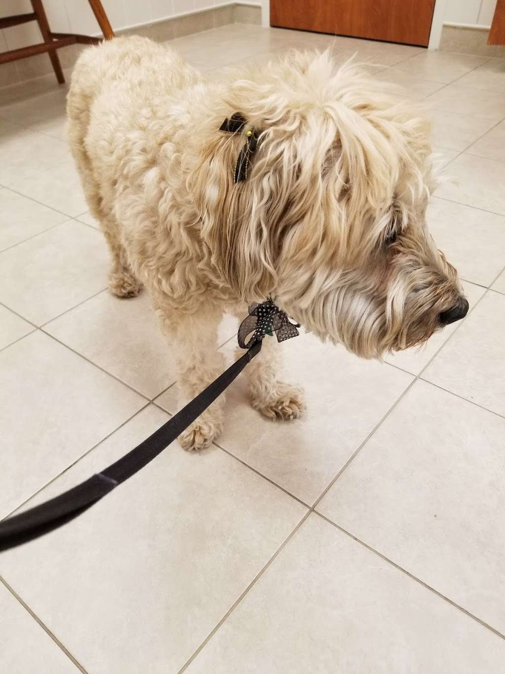 Scituate Animal Hospital - veterinary care  | Photo 1 of 9 | Address: 561 W Greenville Rd, Scituate, RI 02857, USA | Phone: (401) 647-3500