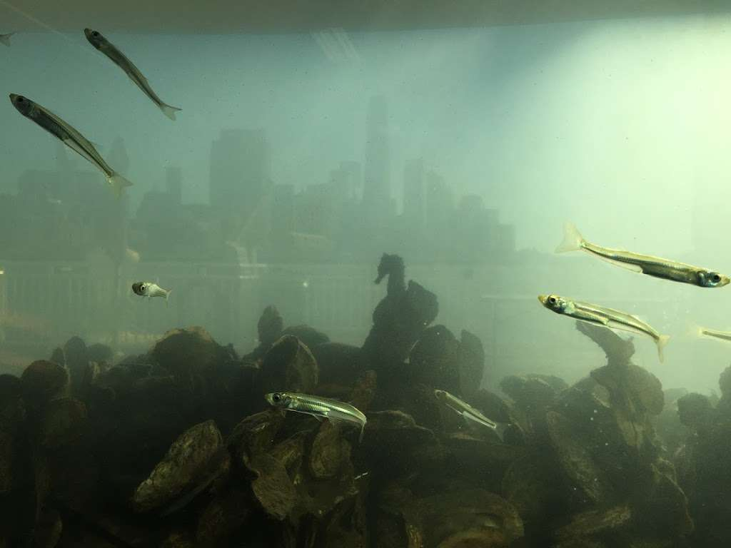 The River Project Wetlab | aquarium | Pier 40, New York, NY 10014, USA