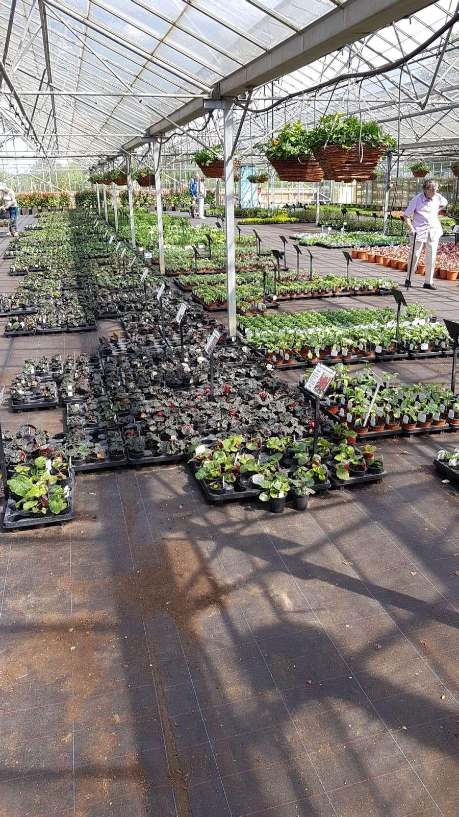 Matthews Plants - store  | Photo 1 of 10 | Address: Hadley Nursery, Tylers Rd, Roydon, Harlow CM19 5LJ, UK | Phone: 01279 793539