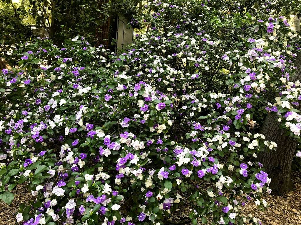 Hilltop Garden - park  | Photo 5 of 5 | Address: La Cañada Flintridge, CA 91011, USA