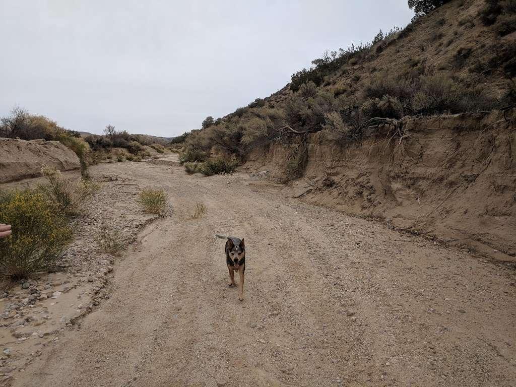 Songdog Ranch - campground    Photo 6 of 9   Address: 680 Ballinger Canyon Rd, Maricopa, CA 93252, USA   Phone: (661) 766-2454