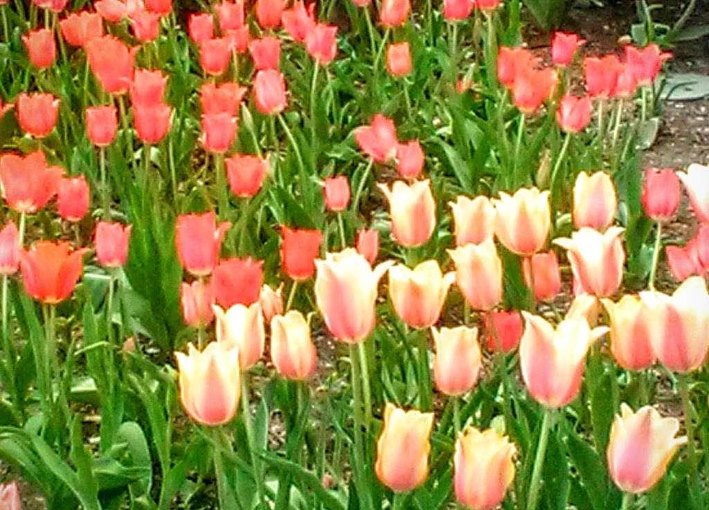 Washington Market Park - park  | Photo 3 of 10 | Address: 199 Chambers St, New York, NY 10007, USA | Phone: (212) 639-9675