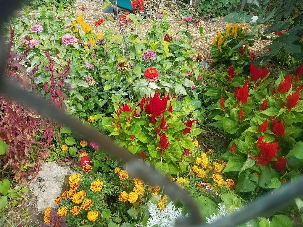 Phoenix Community Garden - park  | Photo 8 of 10 | Address: 2037 Fulton St, Brooklyn, NY 11233, USA | Phone: (212) 788-7900
