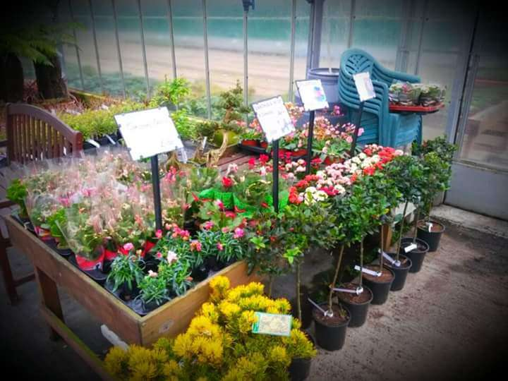 Matthews Plants - store  | Photo 2 of 10 | Address: Hadley Nursery, Tylers Rd, Roydon, Harlow CM19 5LJ, UK | Phone: 01279 793539