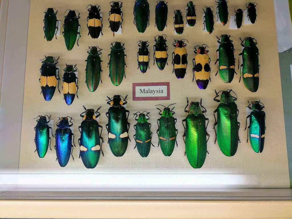 Insectropolis - museum  | Photo 5 of 10 | Address: 1761 U.S. 9, Toms River, NJ 08755, USA | Phone: (732) 349-7090