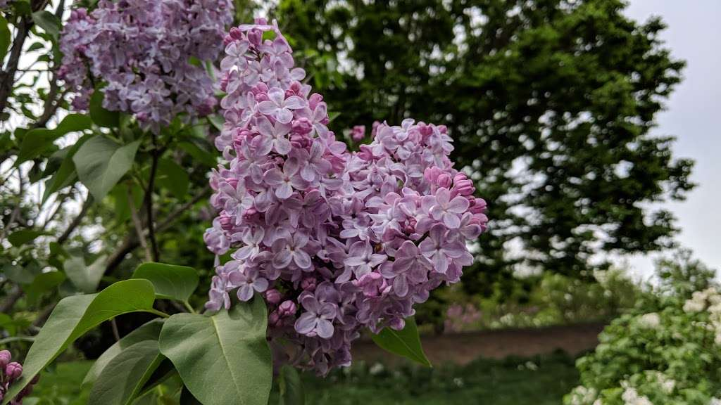 Lilac Collection - park  | Photo 9 of 10 | Address: Bronx Park Rd, Bronx, NY 10467, USA | Phone: (718) 817-8700