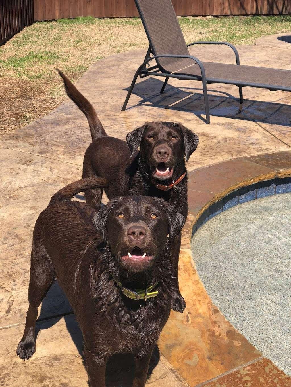 Texas Faith Labradors - pet store  | Photo 5 of 9 | Address: 11125 Tanyard Rd, Willis, TX 77378, USA | Phone: (936) 537-4557