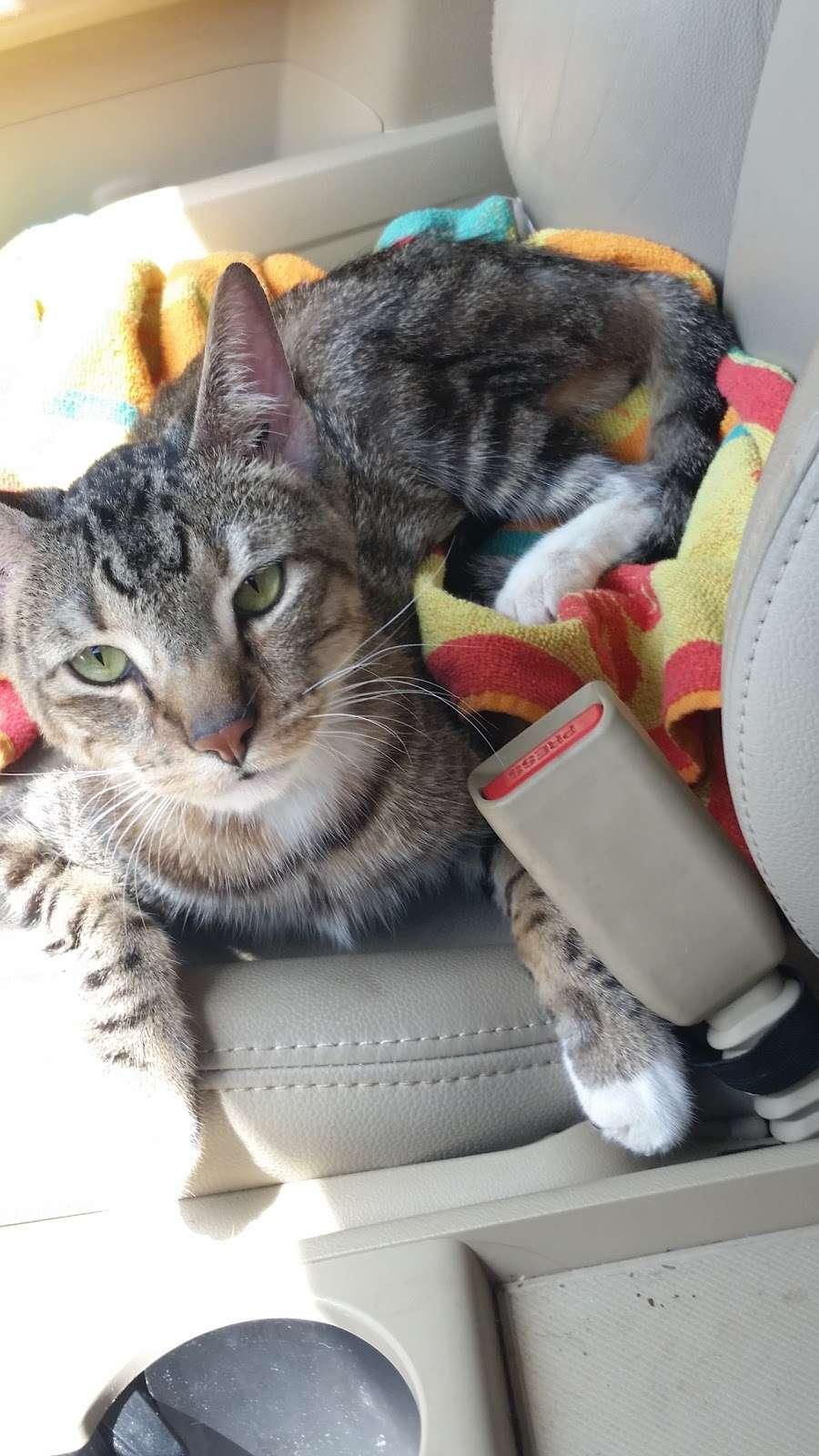 Lake Olympia Animal Hospital - veterinary care  | Photo 9 of 10 | Address: 20413 University Blvd, Missouri City, TX 77459, USA | Phone: (281) 499-7242