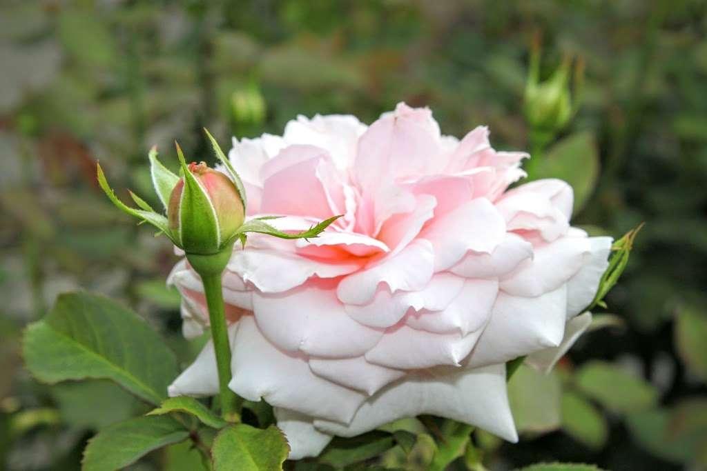 The Jane Watson Irwin Perennial Garden - park  | Photo 7 of 10 | Address: 2900 Southern Blvd, The Bronx, NY 10458, USA | Phone: (718) 817-8700