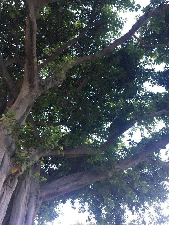 Sauls Park - park  | Photo 3 of 6 | Address: NE 13th Ave, North Miami Beach, FL 33162, USA