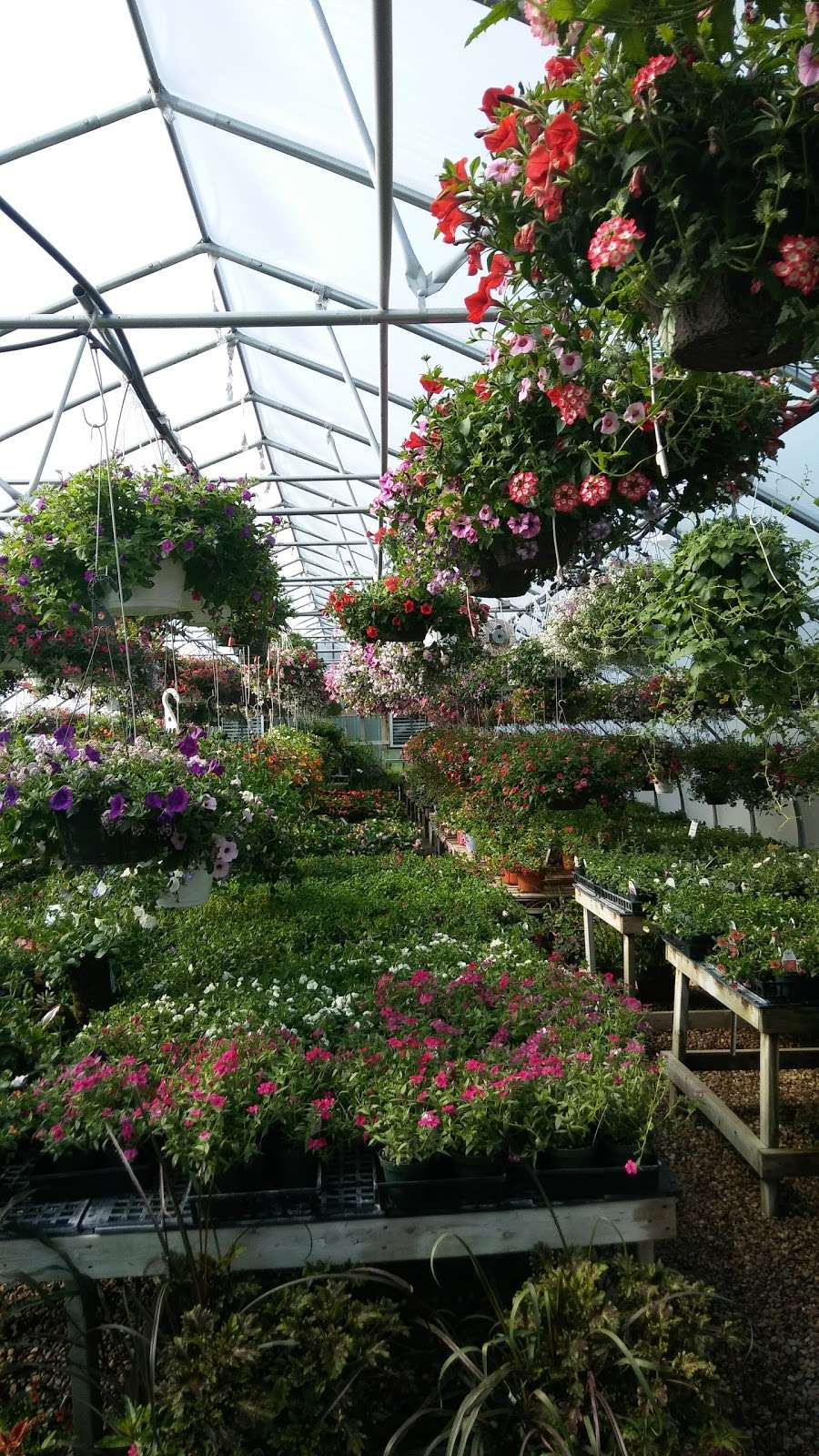 Hahns Greenhouse - store  | Photo 3 of 6 | Address: 2132 N Sage Rd, Walkerton, IN 46574, USA | Phone: (574) 586-3097