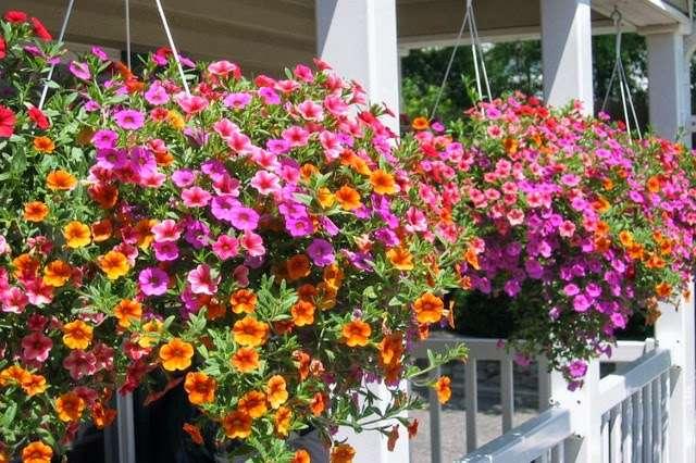 Abridge Garden Centre - florist  | Photo 5 of 10 | Address: Ongar Rd, Abridge, Romford RM4 1AA, UK | Phone: 01708 688558
