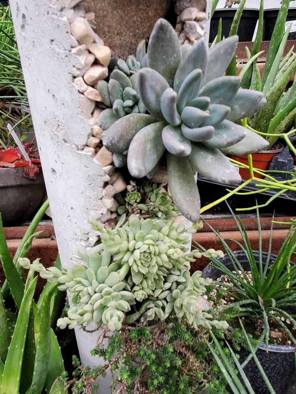 Edwards Greenhouse - florist  | Photo 5 of 10 | Address: 4106 Sand Creek St, Boise, ID 83703, USA | Phone: (208) 342-7548