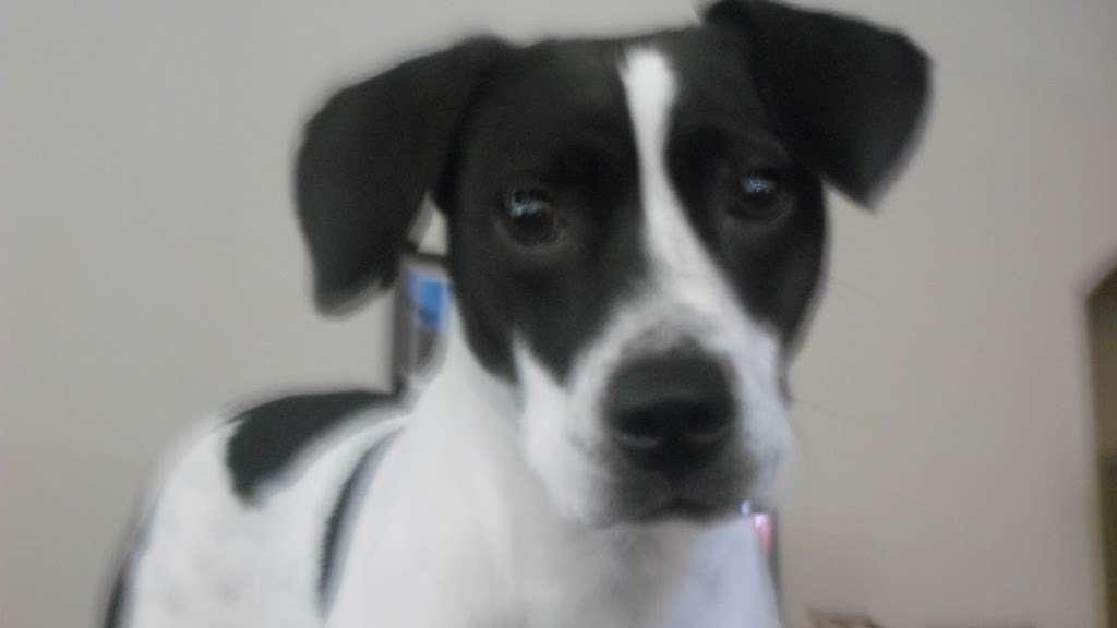 Tender Paws Animal Hospital - pharmacy  | Photo 9 of 10 | Address: 4235 N Frazier St, Conroe, TX 77303, USA | Phone: (936) 856-3339