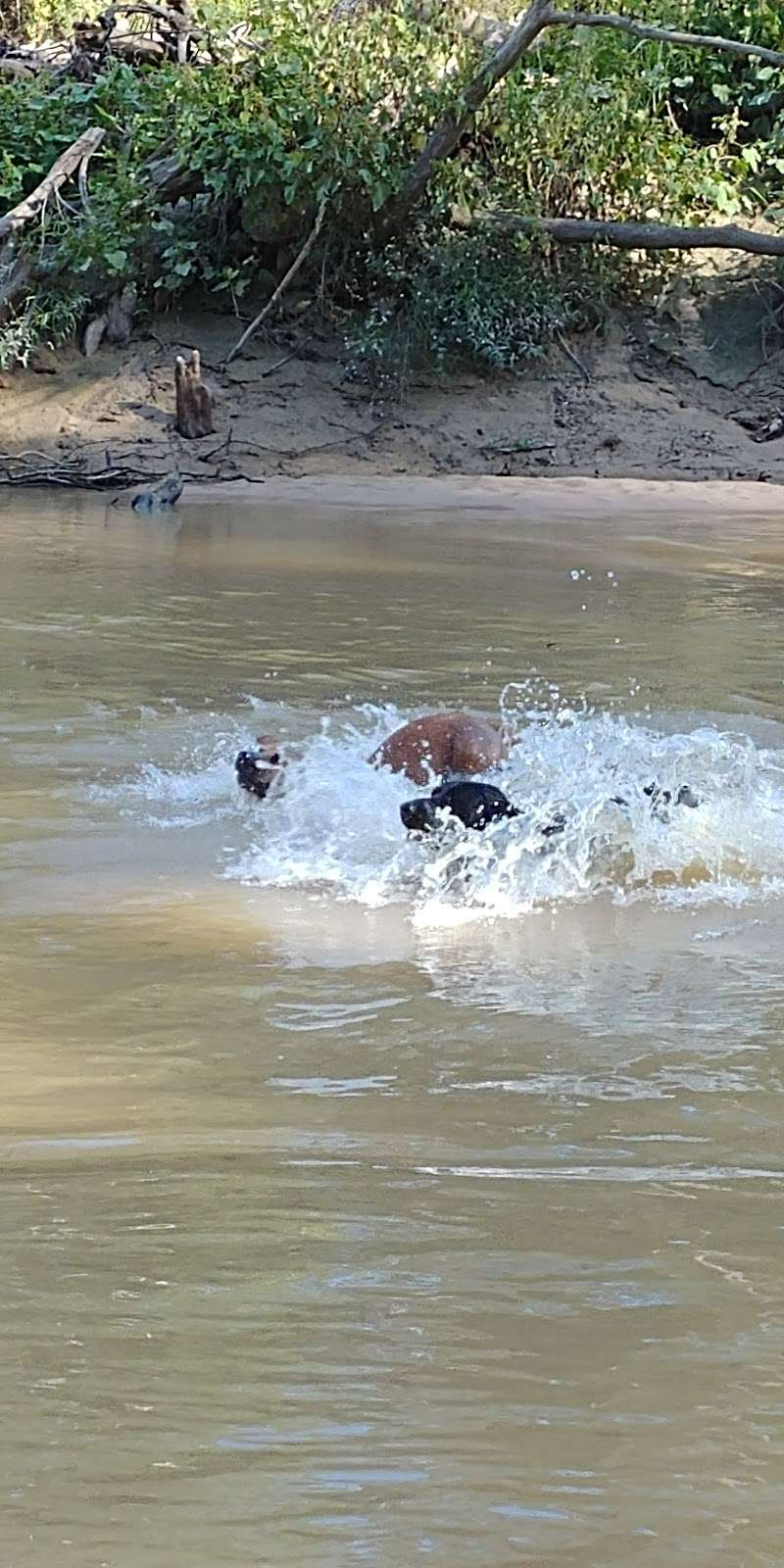 Bibi & Mini-Me Bush Dog Park - park  | Photo 10 of 10 | Address: 4129 Spring Creek Dr, Spring, TX 77373, USA | Phone: (281) 353-8100