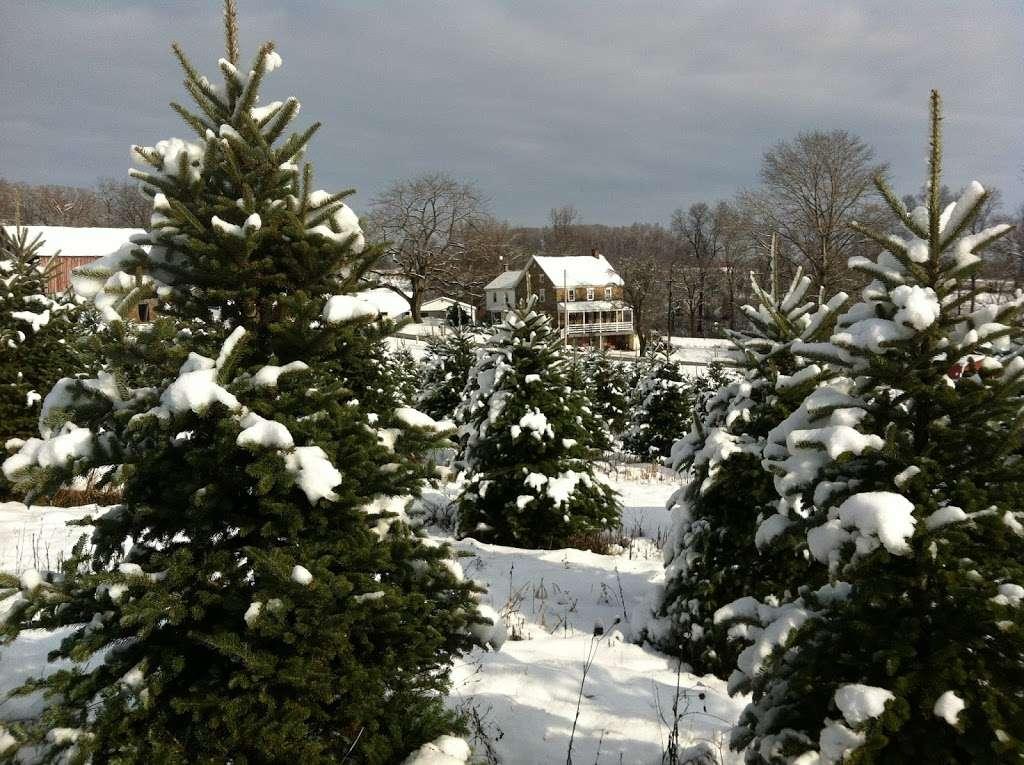 Family Tree Farm, LLC - store  | Photo 3 of 10 | Address: 4688 Dairy Rd, Red Lion, PA 17356, USA | Phone: (717) 332-6365