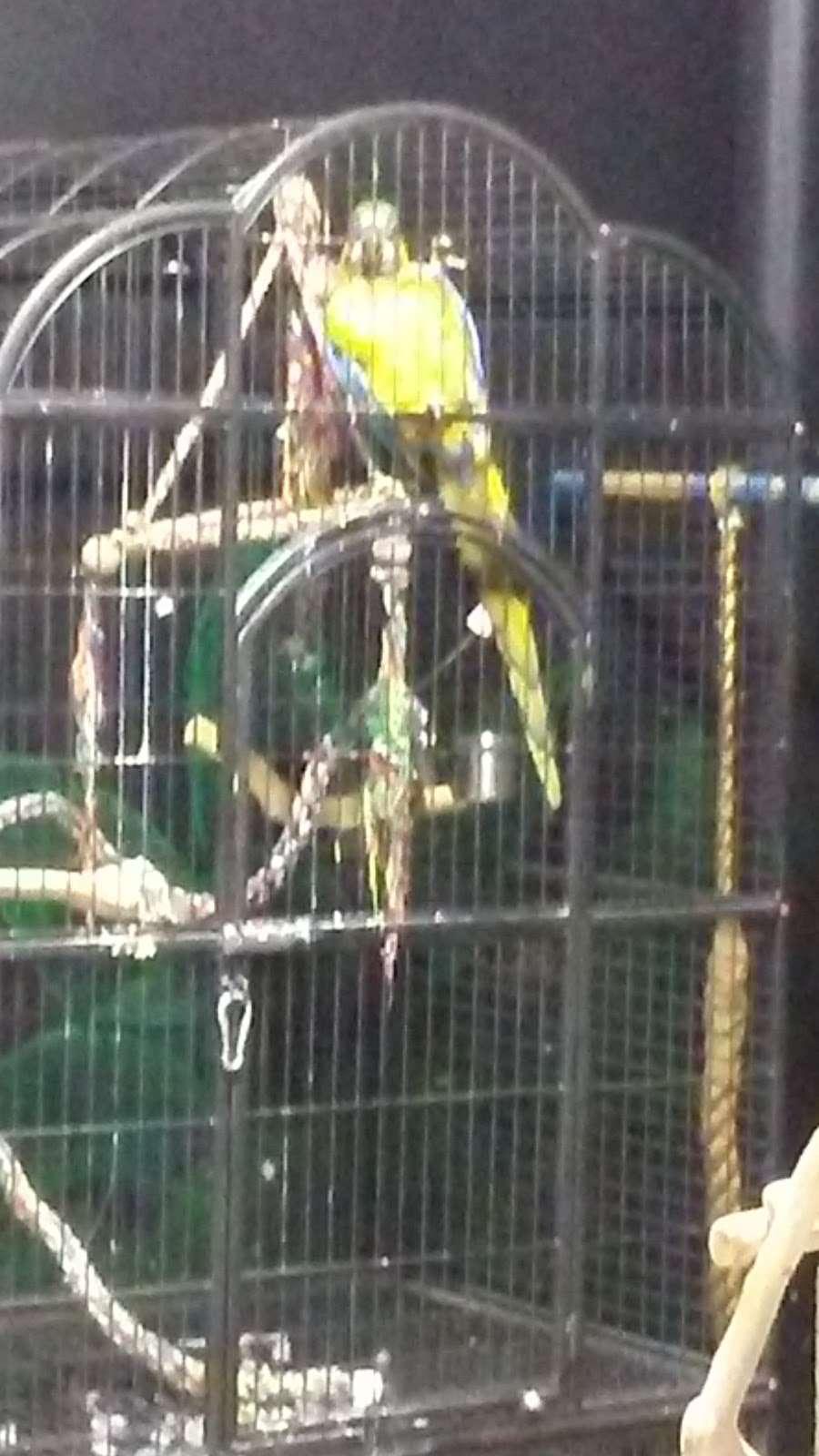 San Antonio Aquarium - aquarium  | Photo 10 of 10 | Address: 6320 Bandera Rd, Leon Valley, TX 78238, USA | Phone: (210) 310-3210
