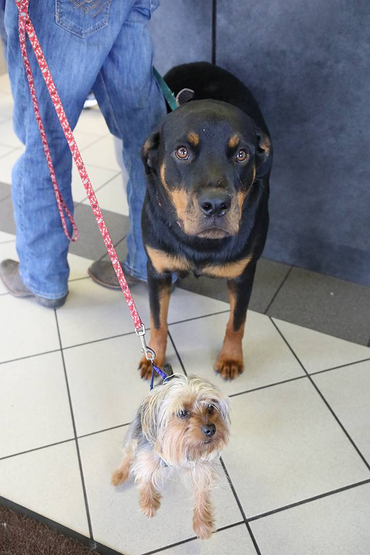 BluePearl Pet Hospital - veterinary care  | Photo 8 of 9 | Address: 3444 Southside Blvd Suite 103, Jacksonville, FL 32216, USA | Phone: (904) 646-1287