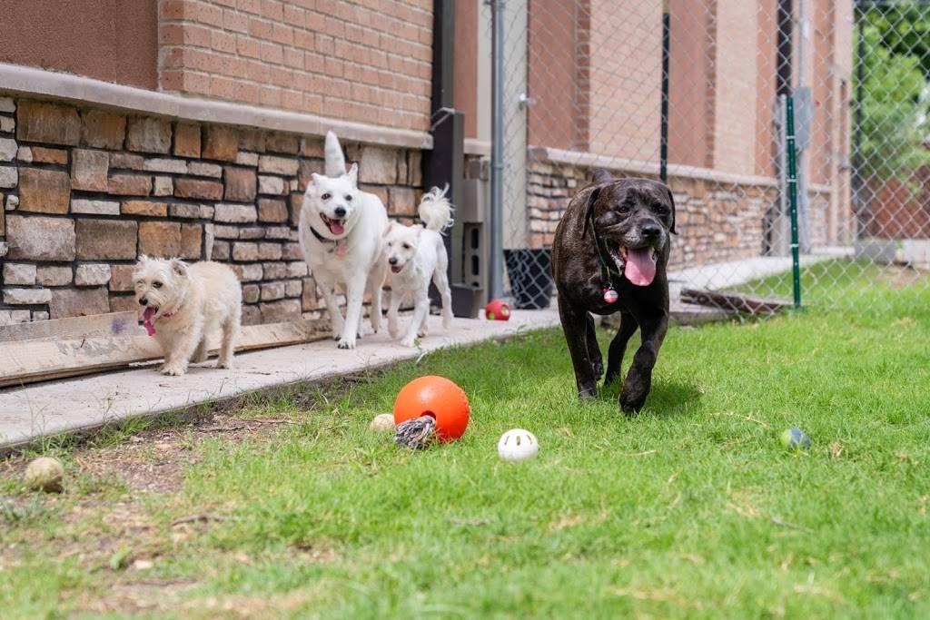 Bethany Pet Hospital - pharmacy    Photo 5 of 9   Address: 1113 E Bethany Dr, Allen, TX 75002, USA   Phone: (214) 383-3800