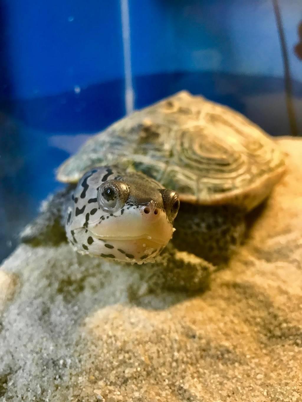 Glen Echo Park Aquarium - aquarium    Photo 3 of 9   Address: 7300 Macarthur Blvd, Glen Echo, MD 20812, USA   Phone: (301) 955-6256