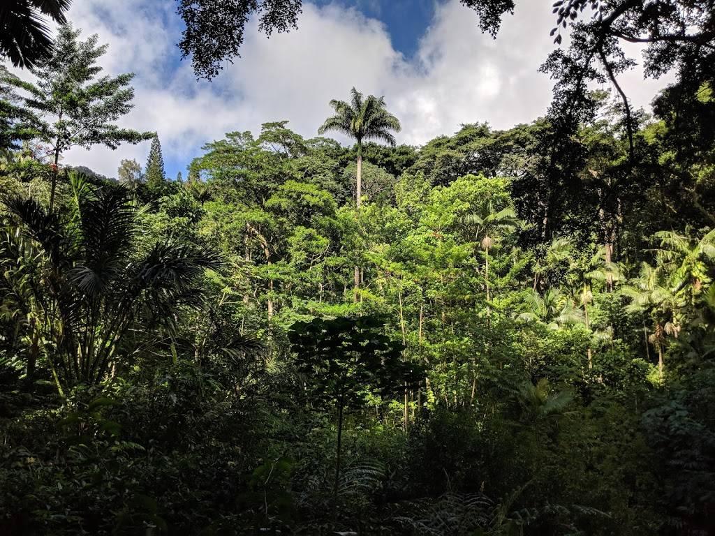 Lyon Arboretum - park    Photo 5 of 9   Address: 3860 Manoa Rd, Honolulu, HI 96822, USA   Phone: (808) 988-0456