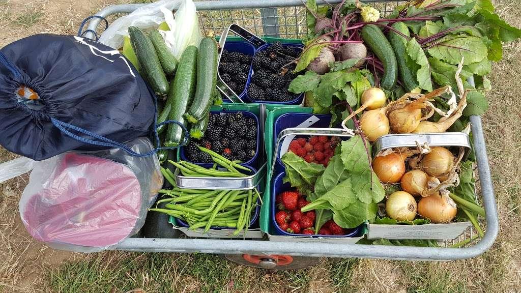 Parkside Farm Pick Your Own - store  | Photo 9 of 10 | Address: Parkside Farm, Hadley Rd, Enfield EN2 8LA, UK | Phone: 020 8367 2035