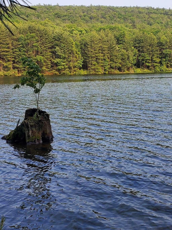 Rocky Knob Trail Head - park  | Photo 5 of 10 | Address: Ridge Rd, Shippensburg, PA 17257, USA | Phone: (717) 352-2211