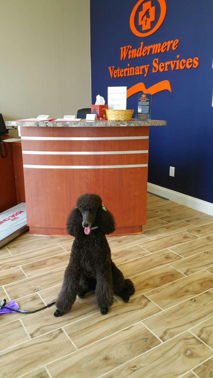 Windermere Veterinary Services - veterinary care    Photo 6 of 10   Address: 7315 Winter Garden Vineland Rd #109, Windermere, FL 34786, USA   Phone: (407) 217-7635